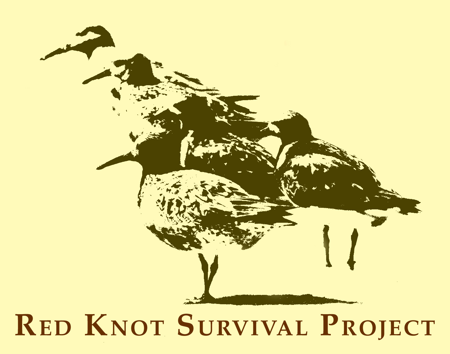 Global Conservation Alliance: Red Knot Survival Project - Home Page
